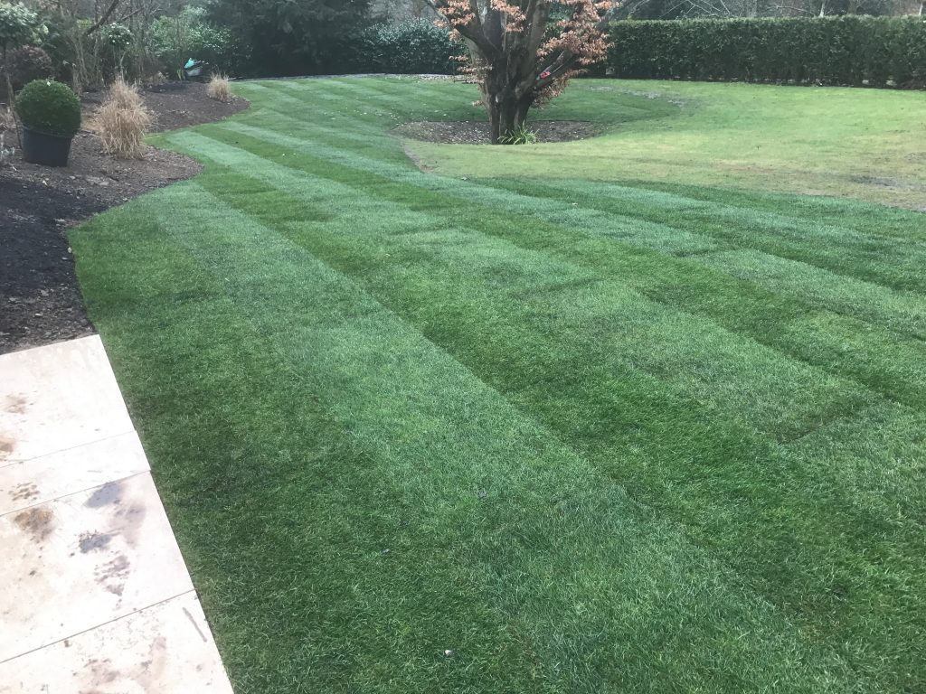 Landscaping - Grading, Turfing & Planting